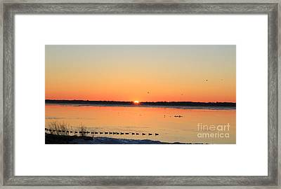 Mallards At Sunrise Framed Print