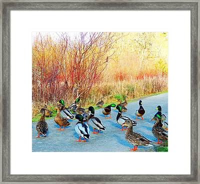 Mallards In The Park Framed Print by Karen Horn
