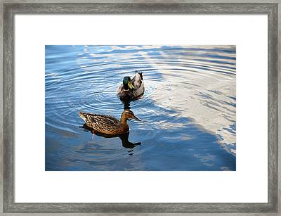 Mallards Lake Hopatcong Nj Framed Print