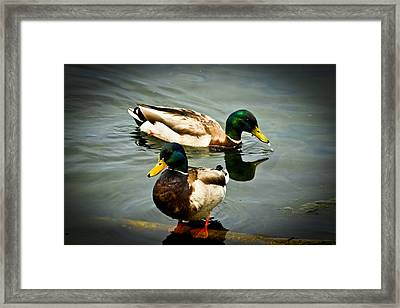 Mallards On Mendota Framed Print by Christi Kraft