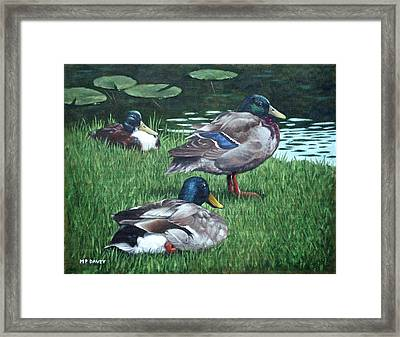 Mallards On River Bank Framed Print by Martin Davey