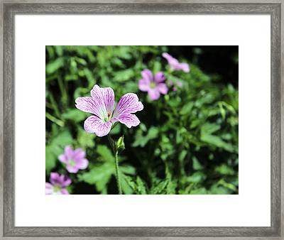 Mallow Cheeses Framed Print by Paul Fell