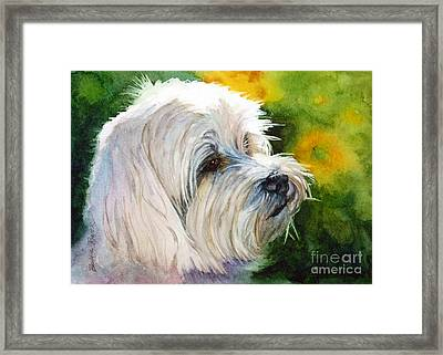 Maltese Framed Print by Bonnie Rinier