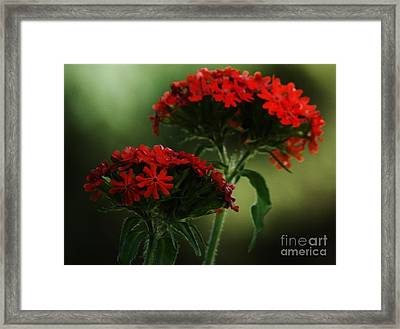 Maltese Cross Framed Print by Christopher Mace