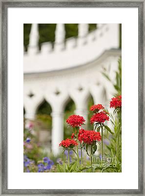 Maltese Cross Flowers Framed Print by Anne Gilbert