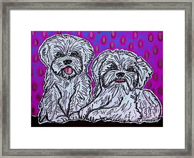 Maltese Duo Pink Bg Framed Print