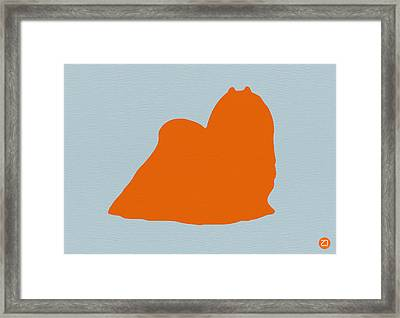 Maltese Orange Framed Print by Naxart Studio