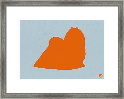 Maltese Orange Framed Print