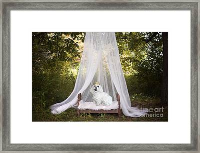 Maltese Princess Framed Print
