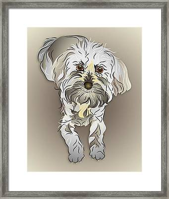 Maltipoo Framed Print by MM Anderson