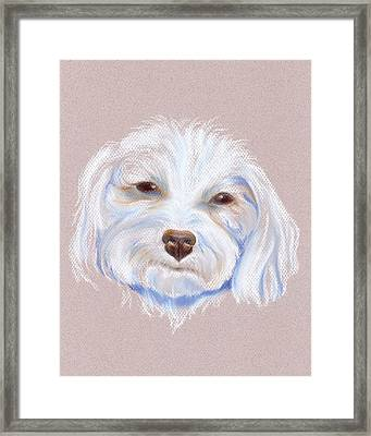 Maltipoo With An Attitude Framed Print by MM Anderson