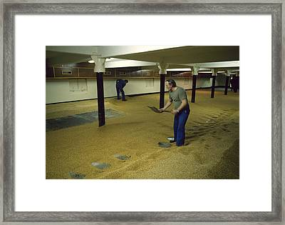 Maltsters Turning The Malt Uk 1987 Framed Print by David Davies