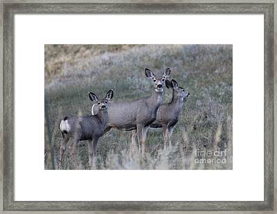 Mama And Babies Framed Print by Brenda Henley