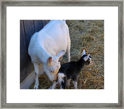 Mama And Baby Framed Print by Carolyn Ricks