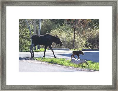 Mama And Baby Moose Framed Print by Fiona Kennard