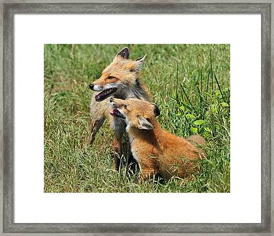 Mama And Kit Framed Print by Angel Cher
