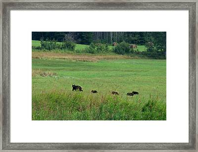 Mama Bear And 4 Cubs Framed Print