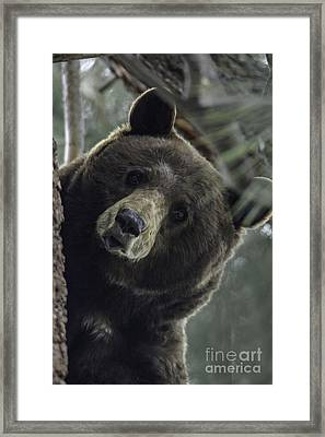Mama Bear Framed Print