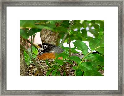 Framed Print featuring the photograph Mama Bird by Melissa Messick
