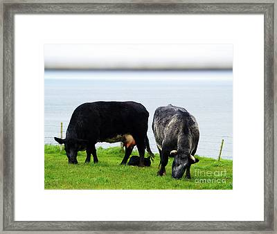 Mama Daddy And Baby Framed Print by Patricia Griffin Brett