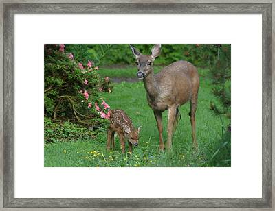 Mama Deer And Baby Bambi Framed Print by Kym Backland