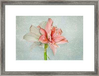 Mama Flamingo Framed Print by Steffen Gierok