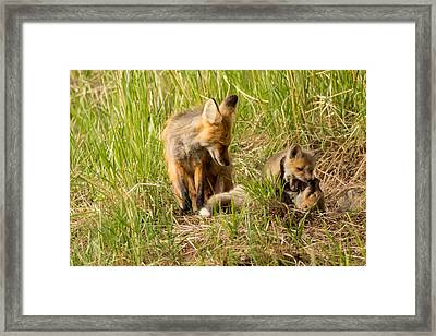 Mama Fox And Kits 2 Framed Print by Natural Focal Point Photography