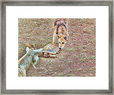 Framed Print featuring the digital art Mama Goat Oso Meets Sammy The Tortoise by Robert Rhoads