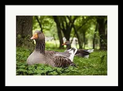 Mother Goose Framed Prints