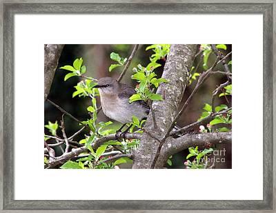 Mama's Gonna Buy You A Mockingbird Framed Print by Benanne Stiens