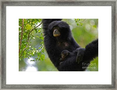 Mamas Hammock Framed Print by Ashley Vincent