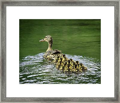 Mamas Peeps Are Not In A Row Framed Print