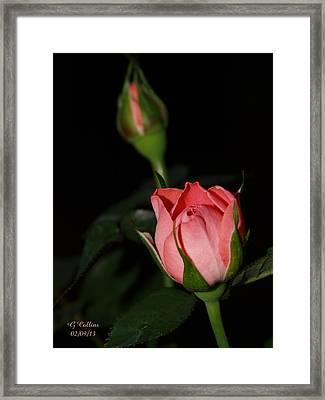 Mama's Rose Framed Print