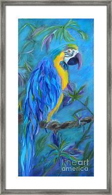 Mambo Framed Print by Lynn Rattray
