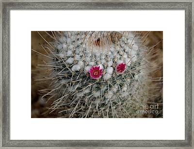 Framed Print featuring the photograph Mammillaria Geminispina by Scott Lyons