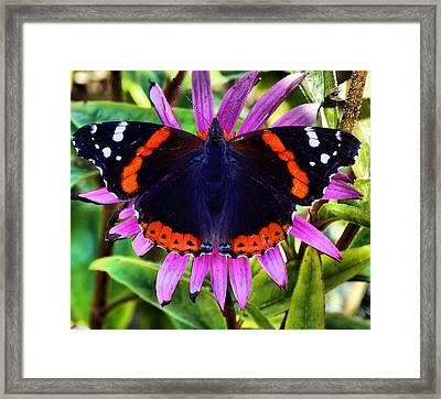 Mammoth Butterfly Framed Print by Dan Sproul