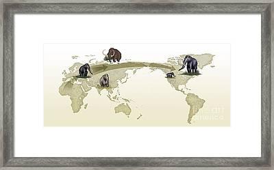 Mammoth Evolutionary Migration Framed Print by Spl