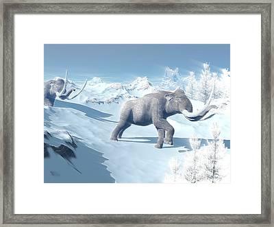 Mammoths Walking Slowly On The Snowy Framed Print by Elena Duvernay