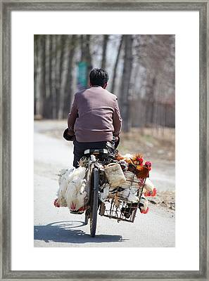Man And Chickens On A Bike Framed Print by Ashley Cooper