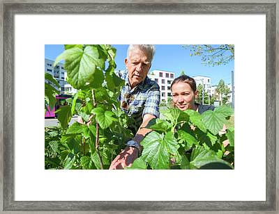 Man And Woman Inspecting Plants Framed Print