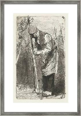 Man Binds Beans Stakes In Vegetable Garden Framed Print by Bernardus Johannes Blommers