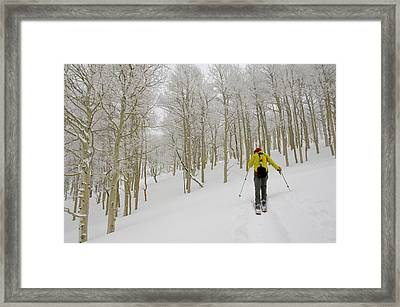 Man Climbing Through Rimed Aspen Trees Framed Print