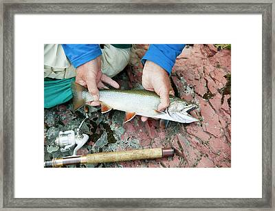 Man Hold Brook Trout Framed Print