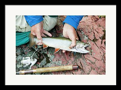 Brook Trout Image Photographs Framed Prints