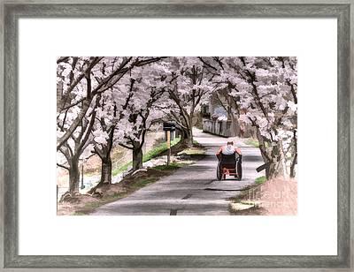 Man In Wheelchair Under Cherry Blossoms Framed Print by Dan Friend