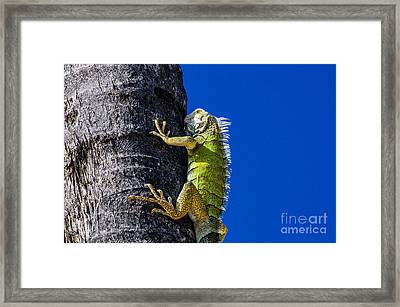 Man Is This Beach Crowded Framed Print