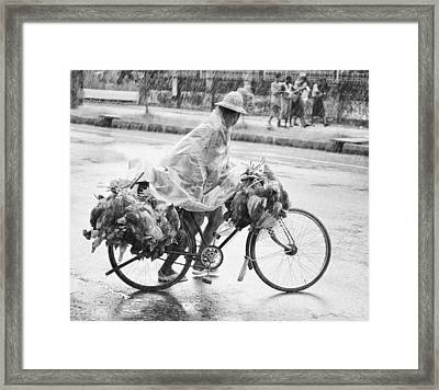 Man Riding Bicycle Carrying Chickens Framed Print