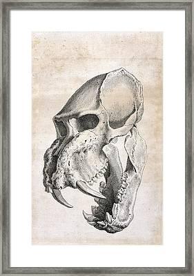 Man-tiger Skull Framed Print by British Library