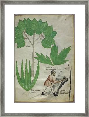 Man With An Axe Breaking Rock Framed Print by British Library