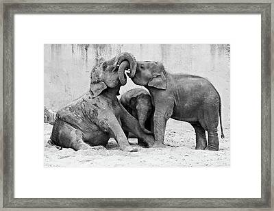 Ma?nage A? Trois Framed Print by Antje Wenner-braun